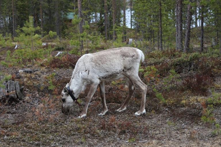 20170606 Finnland Mitte 018