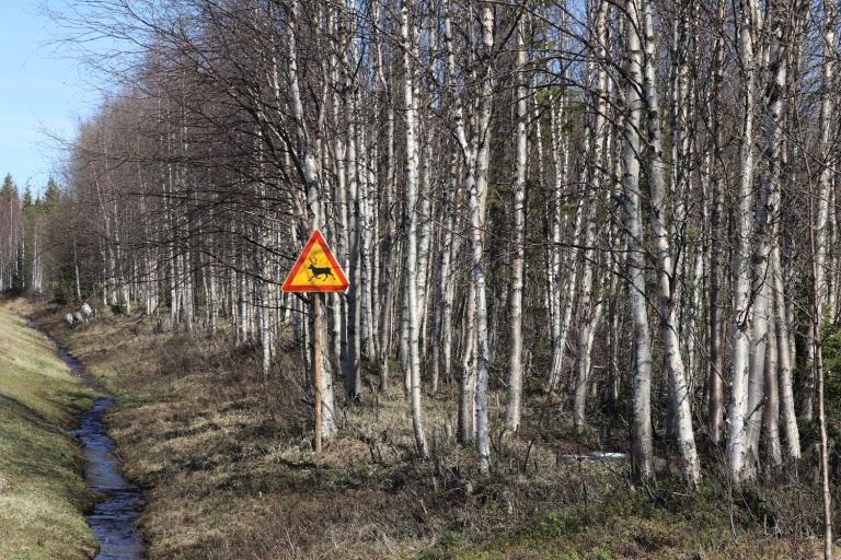 20170609 Finn-Lappland 026