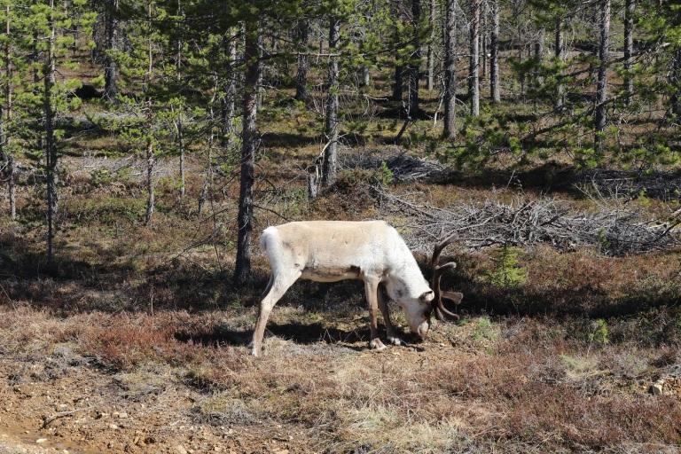 20170609 Finn-Lappland 031