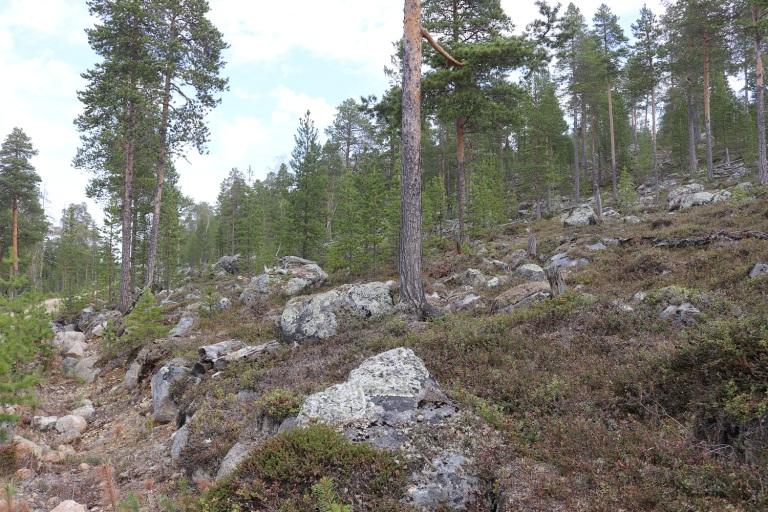 20170610 Finnland Lappland1 008